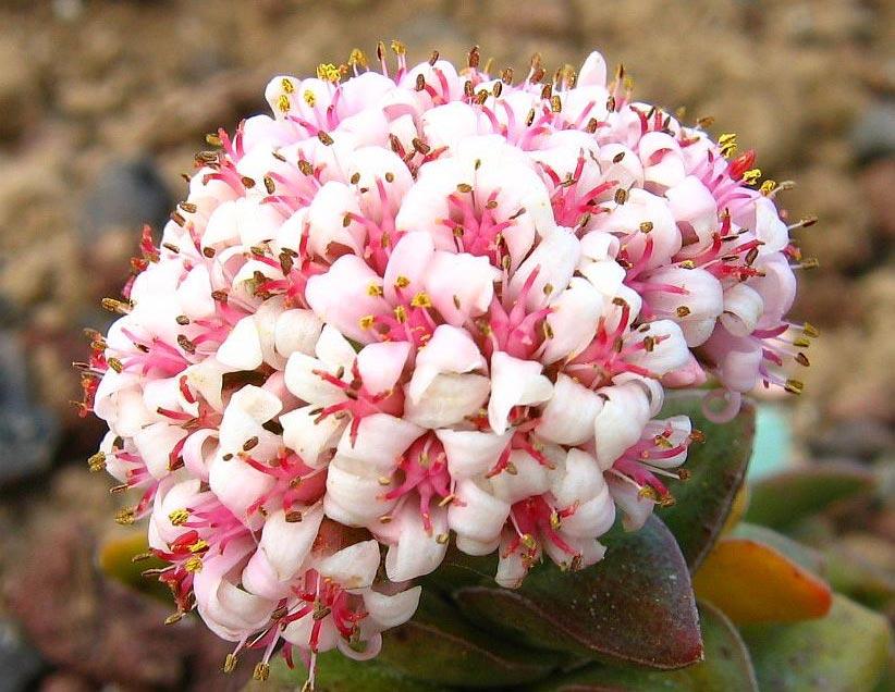 http://ramos-flores.florpedia.com/images/ramos-flores-significado-color.jpg