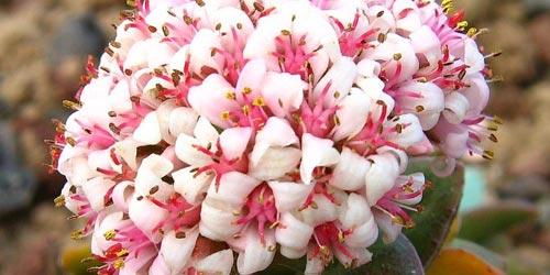 Ramos de flores. Significado del color del ramo